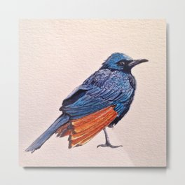 Birds: Starling Series | Red-winged Starling Metal Print