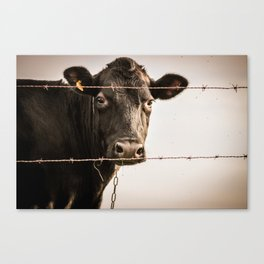 How Now, Brown Cow? Canvas Print