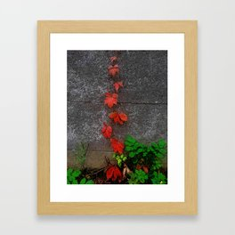 Red and green leaves on the wall Framed Art Print