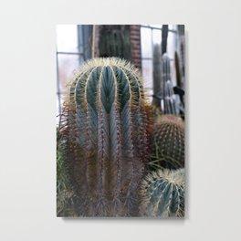 Barrel Cactus Colors Metal Print