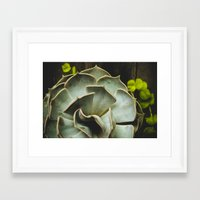 succulent Framed Art Prints featuring Succulent by Olivia Joy StClaire