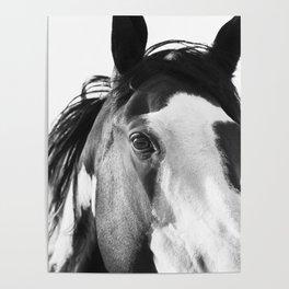 Paint Horse | Modern Horse Art Poster