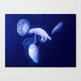 Moon Jellyfish Canvas Print