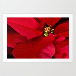 Poinsettia Christmas Art Print