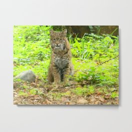 """Bobcat-after the cat shifted poses.""  By Doz.  (3 of 3) Nature Series #3. Metal Print"