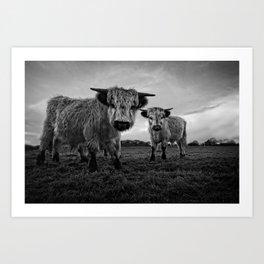 Two Shaggy Cows Art Print