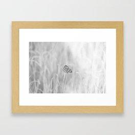 Junonia coenia, Common Buckeye Butterfly Black and White Framed Art Print