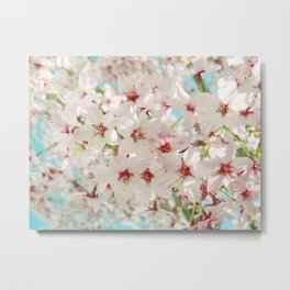 Cherry Blossom afternoon Metal Print