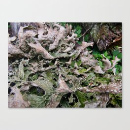 Life on a Fallen Tree Canvas Print