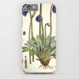 Flower meconopsis simplicifolia iPhone Case
