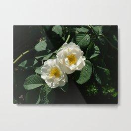 Flower Pic 3 Metal Print
