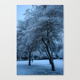 Early Morning Snow, Ravenna Park Canvas Print