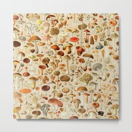 Vintage Mushroom Designs Collection Metal Print