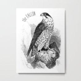 The Peregrine Falcon Metal Print