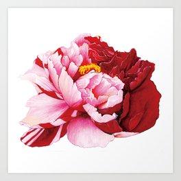 Bi-Color Peony Flower Watercolor Illustration Art Print