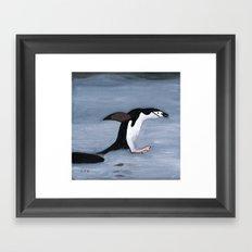 Chin Strap Penguin Taking the Plunge Framed Art Print