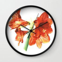 AMMARYLLIS Wall Clock