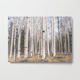 Tall Birch Forest Metal Print
