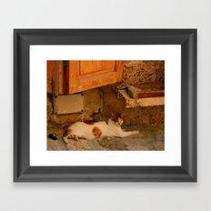 Stray Cat in Israel Framed Art Print