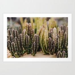 Cactus Fingers Art Print