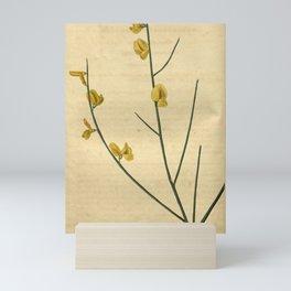 Flower 2674 spartium aethense Three seeded Broom10 Mini Art Print