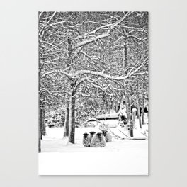 Louie's Sheep Canvas Print