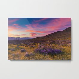 Desktop Wallpapers California USA Mojave Desert Nature Hill Lavandula Ranunculus Sunrises and sunsets lavender spearworts buttercups sunrise and sunset Metal Print
