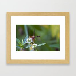 The Wasp Framed Art Print
