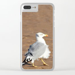 Seagull in a windy day with ruffled feathers Clear iPhone Case