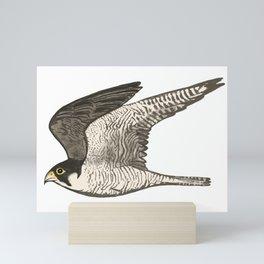 Flying Falcon Colored Pencil Art Mini Art Print