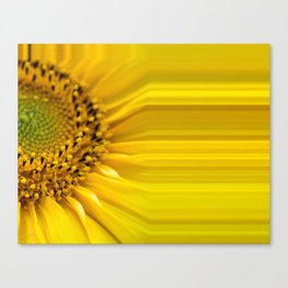 Sunflowers stripes - yellow package Canvas Print