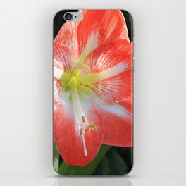 Kayla's Christmas Flower iPhone Skin