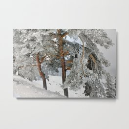 """""""Ghost Forest II"""". Yesterday after the snowstorm Metal Print"""