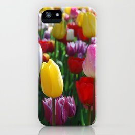 Colorful Springtime Tulips in the Netherlands iPhone Case
