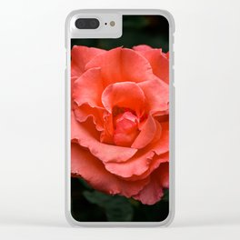 Touch of Class hybrid orange rose is blooming Clear iPhone Case