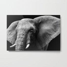 Close-up Elephant Metal Print