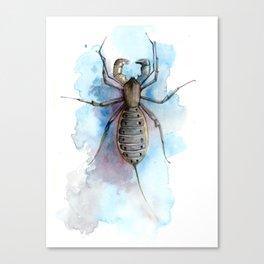 Vinegaroon Canvas Print