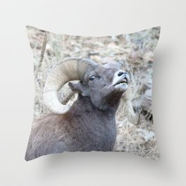 Watercolor Sheep, Bighorn Ram 17, Drake, Colorado Throw Pillow
