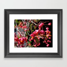 Pink and Orange October Fruits Framed Art Print