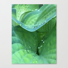 Hosta Rain Drops 2 Canvas Print