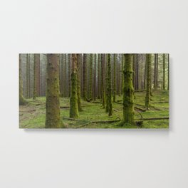 Mossy Spruce Forest Metal Print