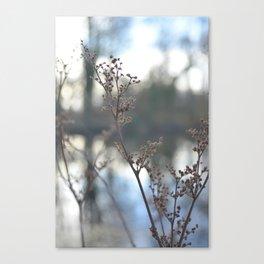 Winter Cow Parsley, Fine Art Photographic Print. Home Decor Canvas Print
