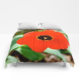 Red Portal Comforters