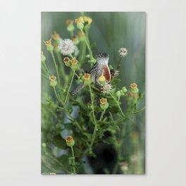 Hello Lizard  Canvas Print