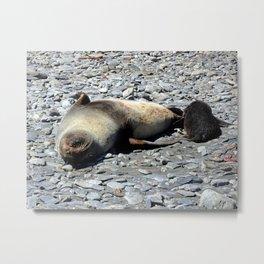 Mother Fur Seal and Pup Metal Print