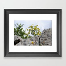 A yellow small tree Framed Art Print