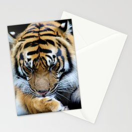 Milk Paws Stationery Cards