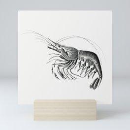 Vintage prawn marine life illustration 5 Mini Art Print