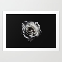 Rose Petal blossom black and white floral photograph / art photography Art Print