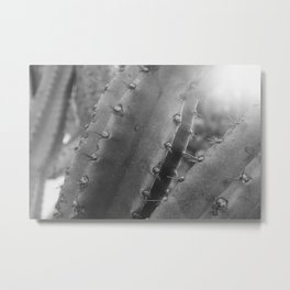 Kaktus #4 / b&w Metal Print